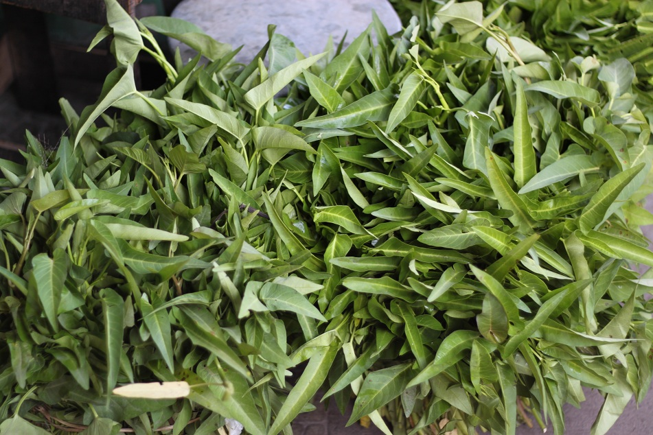 Kangkung (Water Spinach)