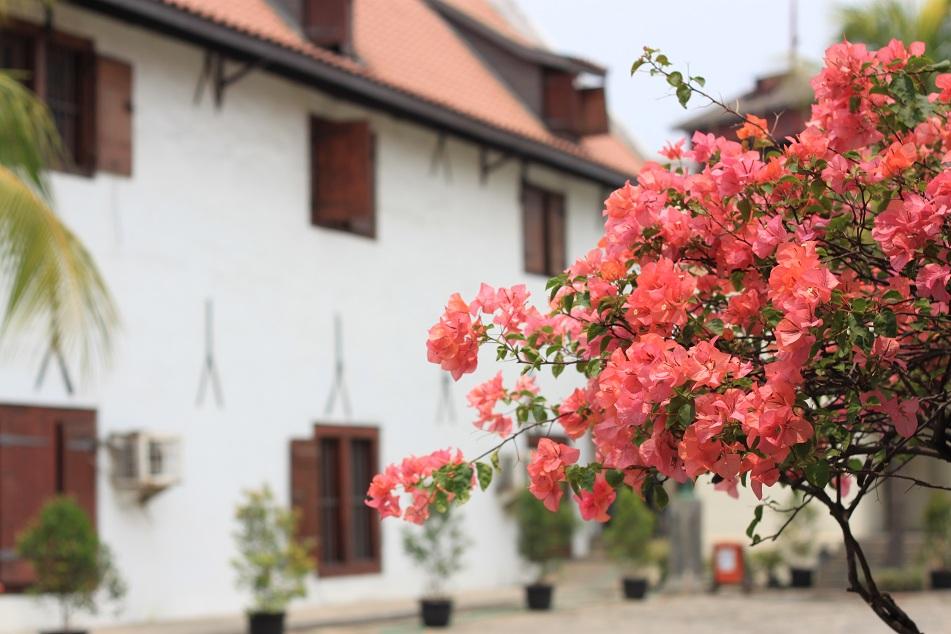 Flowers – Museum Bahari