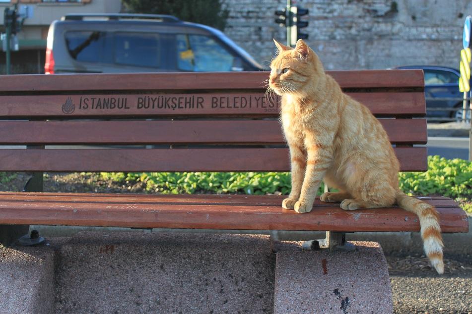 Pensive, Kennedy Avenue