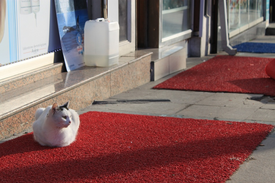 Celebrity on a Red Carpet, Sultanahmet