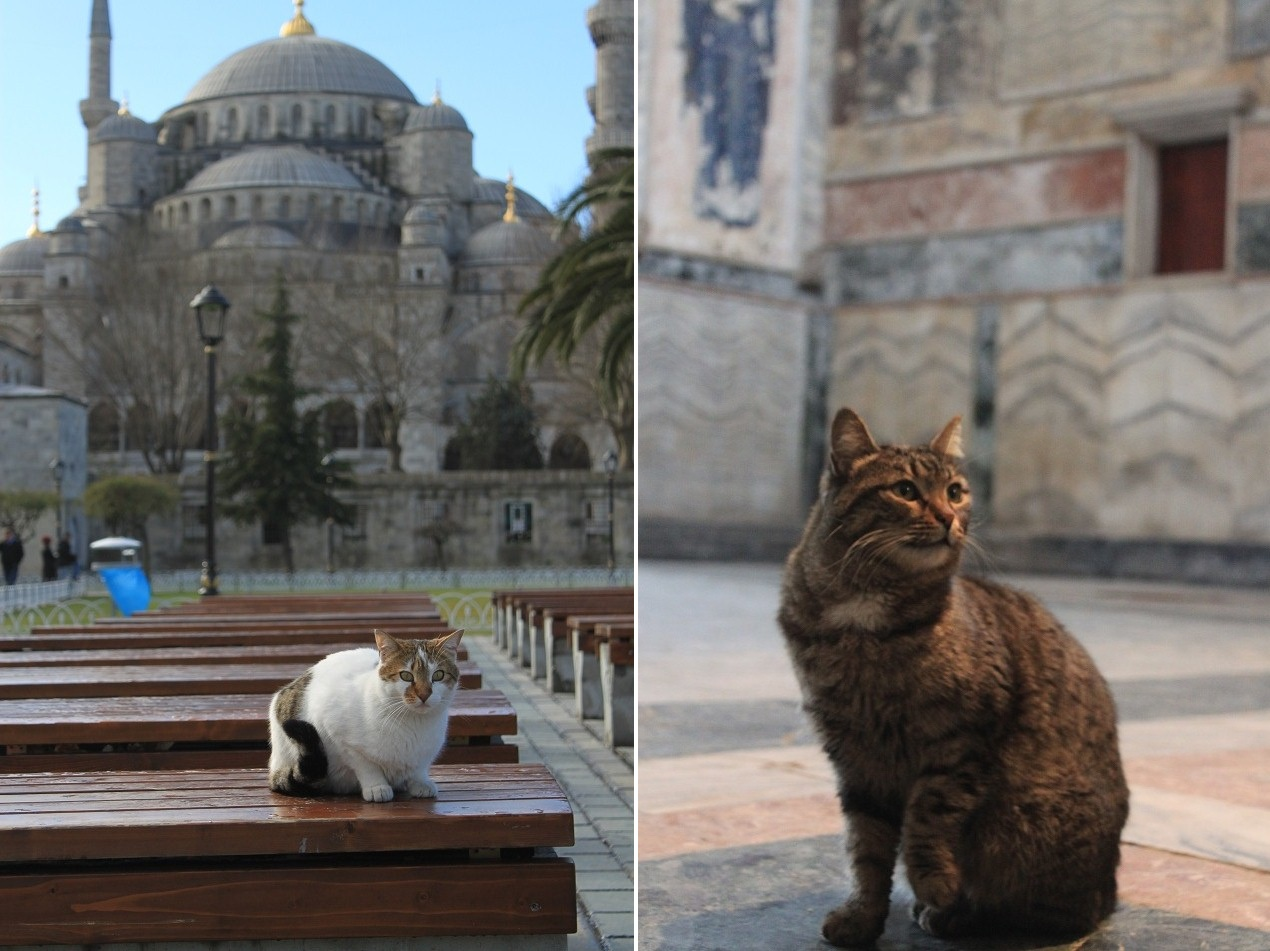 Alert, Sultanahmet (left); Chin Up, Chora Church (right)