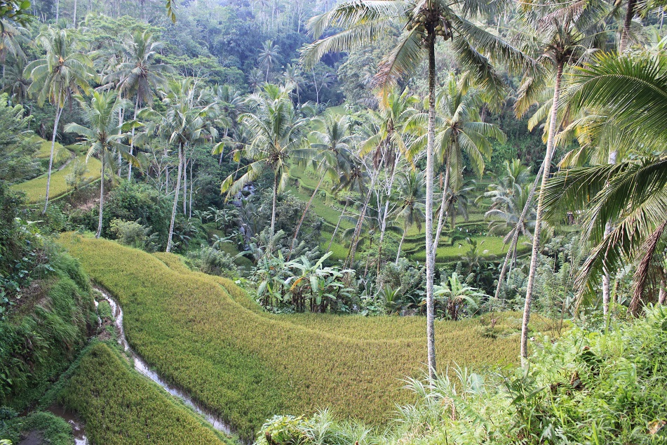 Agricultural Bali