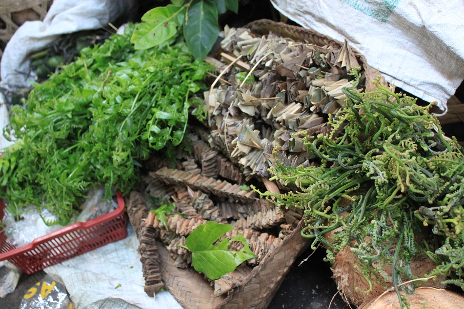 Fern for Balinese Dishes