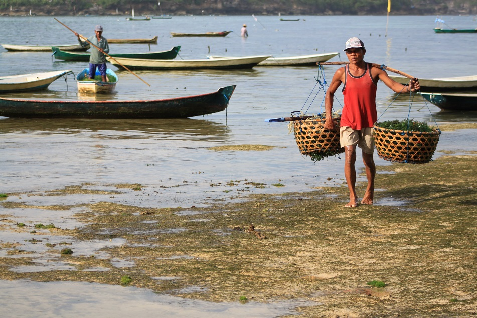 Carrying Baskets of Seaweed