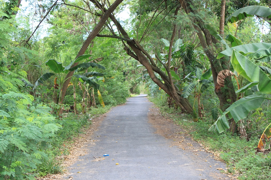 The Leafy Road of Nusa Lembongan