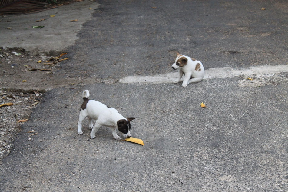 Adorable Puppies on the Road