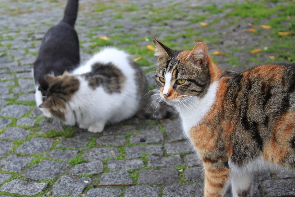 The Adorable Cats of Istanbul...