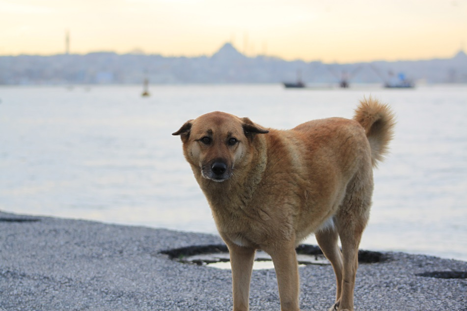 ...and A Lonely Dog Who Kept Following Us in Üsküdar