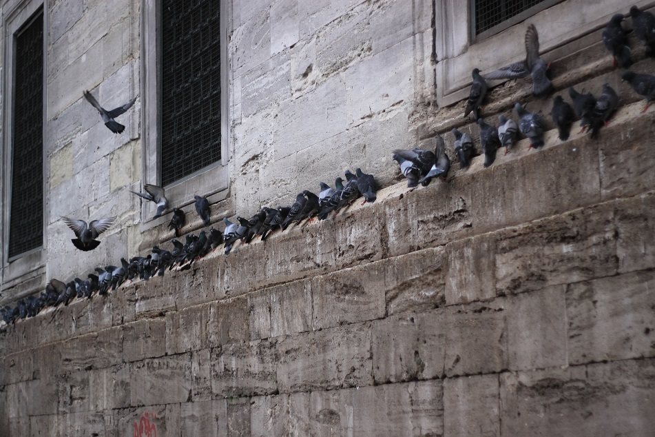 Busy Pigeons at Eminönü