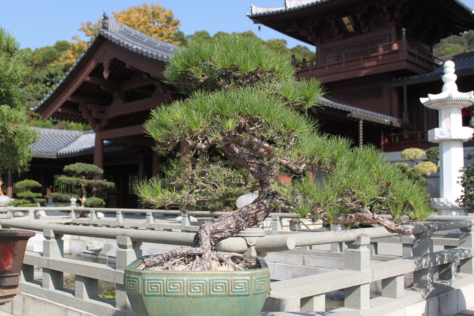 Bonsai, Beauty Crafted Through Time