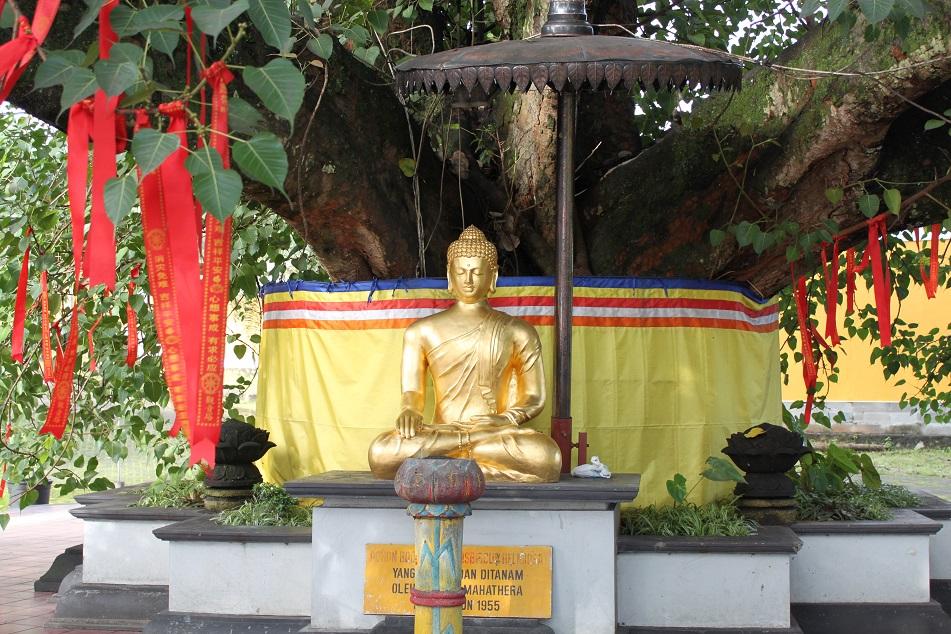 Golden Buddha under A Tree