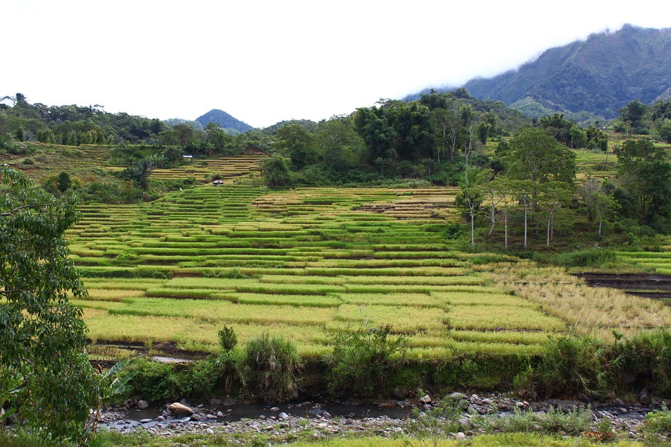 Rice Terraces, Detusoko