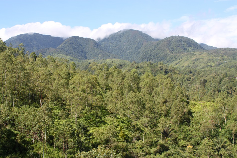 Undulating Verdant Hills and Mountains of Manggarai