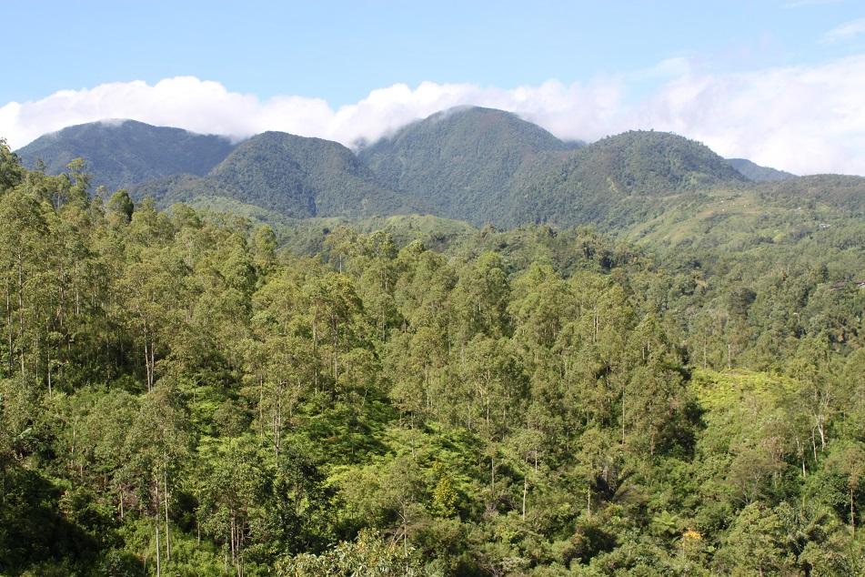 Undulating Verdant Hills and Mountains of Manggarai