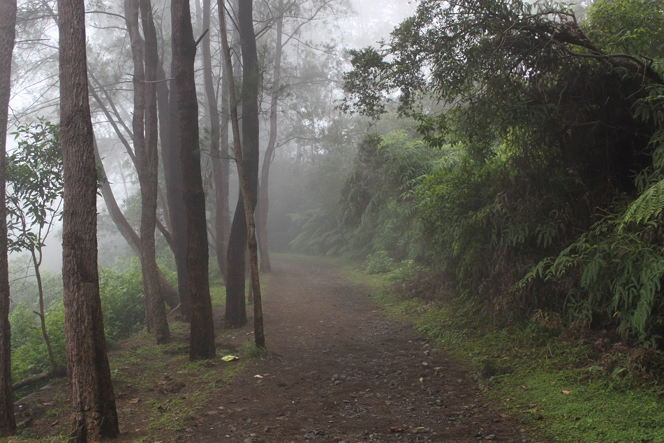 Misty Path to the Lakes
