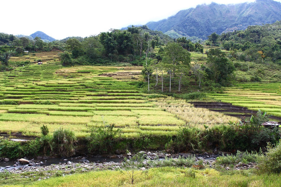 RIce Terraces, Detusoko