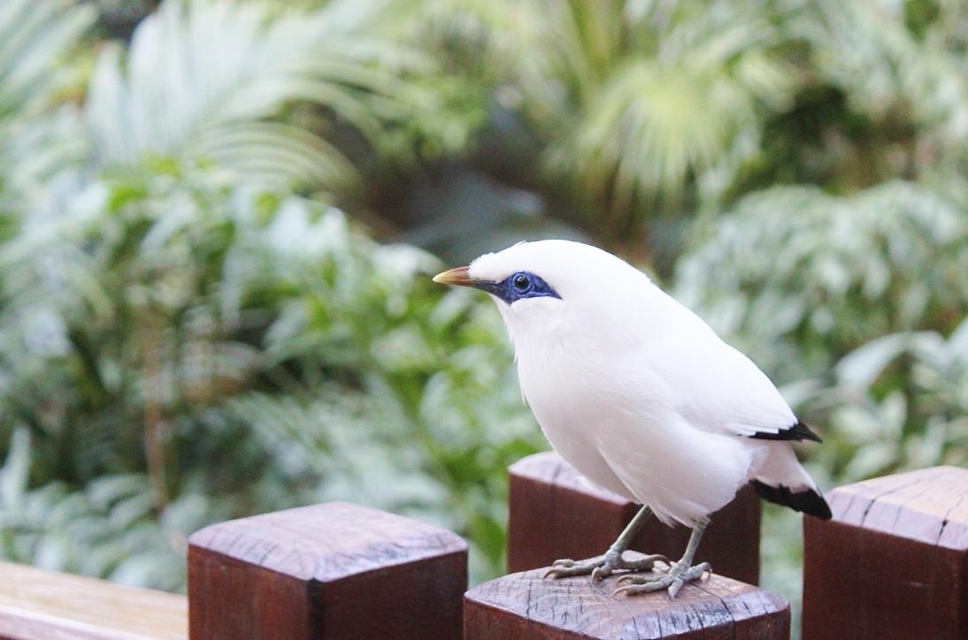 One Curious Little Bird