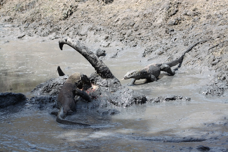 Feast in the Mud Pool