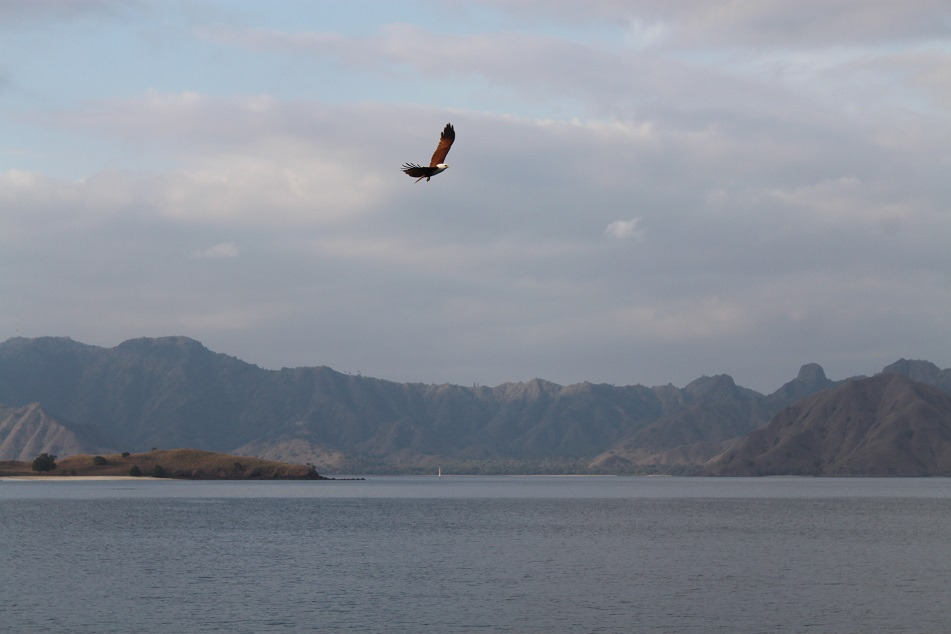 A Kite Flying Low Near Our Boat