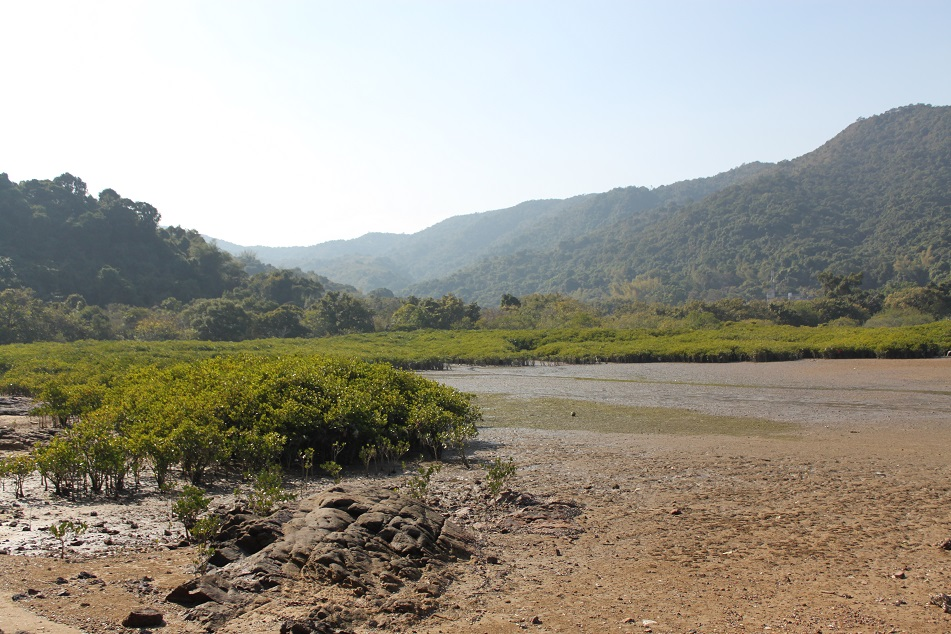 Mangrove Swamps at Low Tide