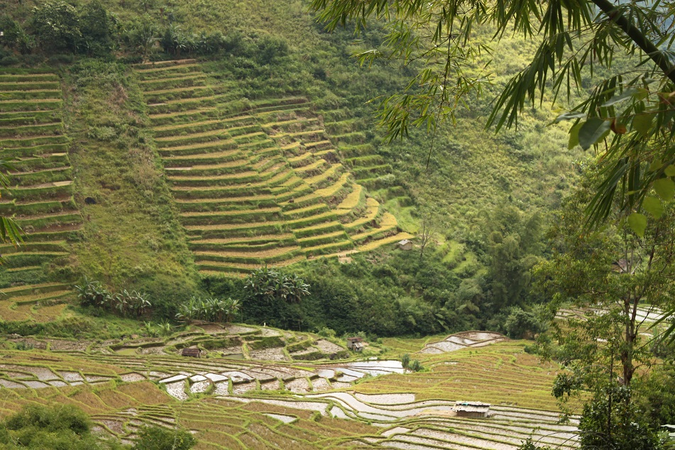 The Majestic Rice Terraces of Manggarai