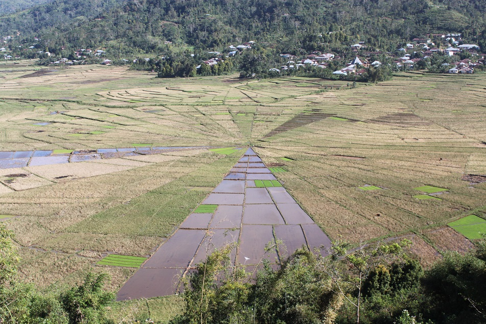 Spider Web Rice Fields at Cancar