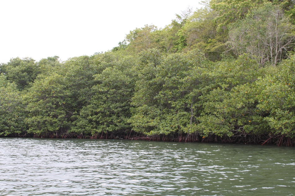 Dense Vegetation Comprising 14 Species of Mangrove