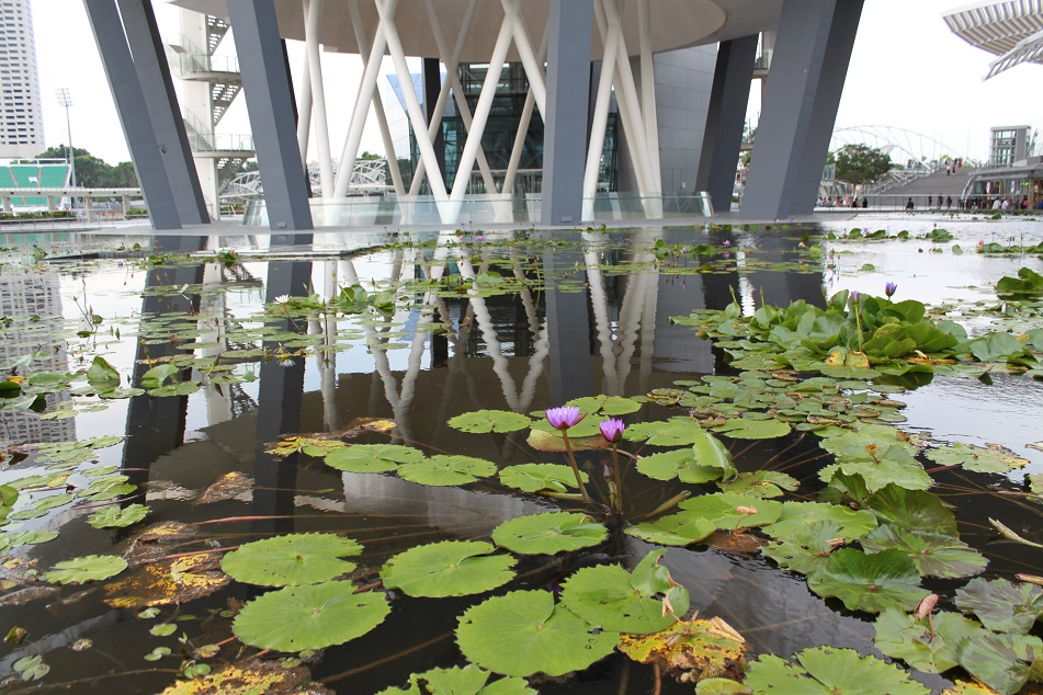 Lotus Pond beneath the Alienesque Museum