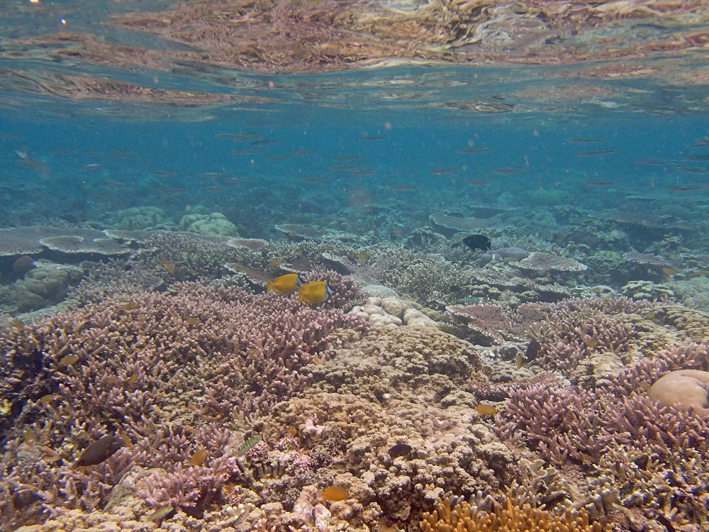Underwater Garden at Menjangan Island
