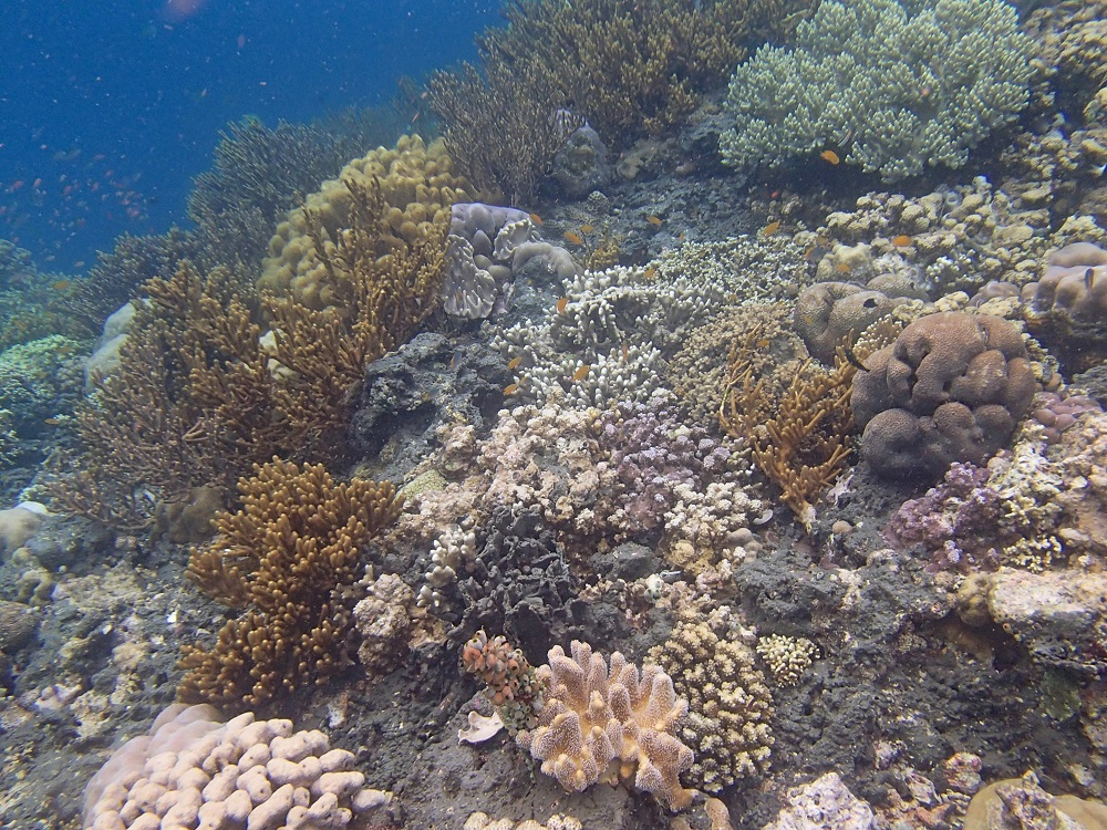 Corals Flourish