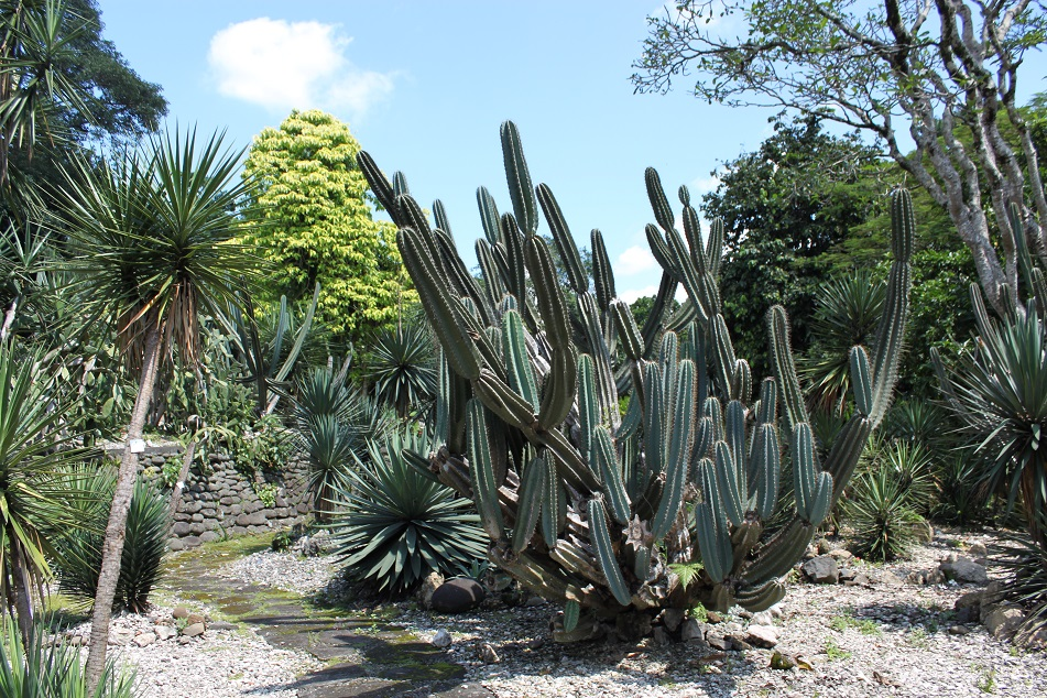 Cacti in the Mexican Section