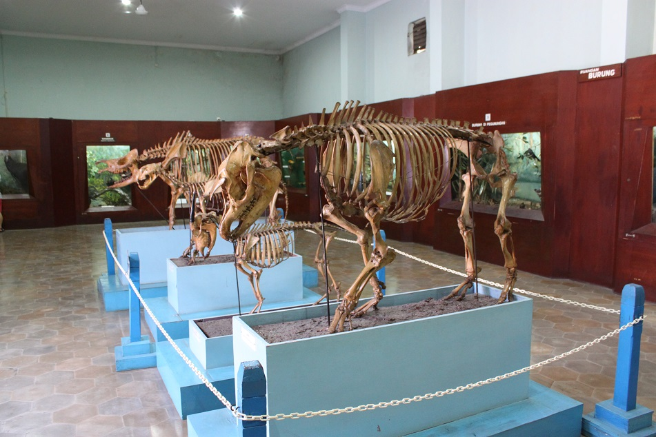 Animal Skeletons inside the Zoology Museum