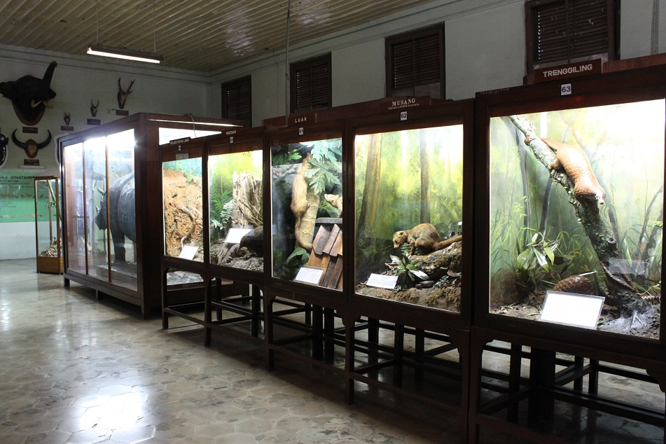 Preserved Animals
