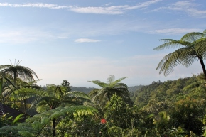 A Sweeping View of Batukaru's Pristine Rainforest