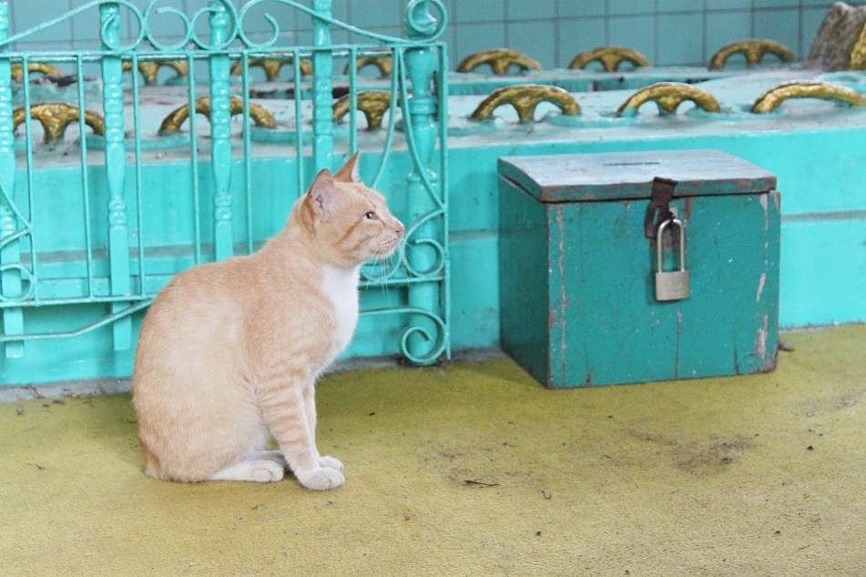 A Resident Cat at the Tomb