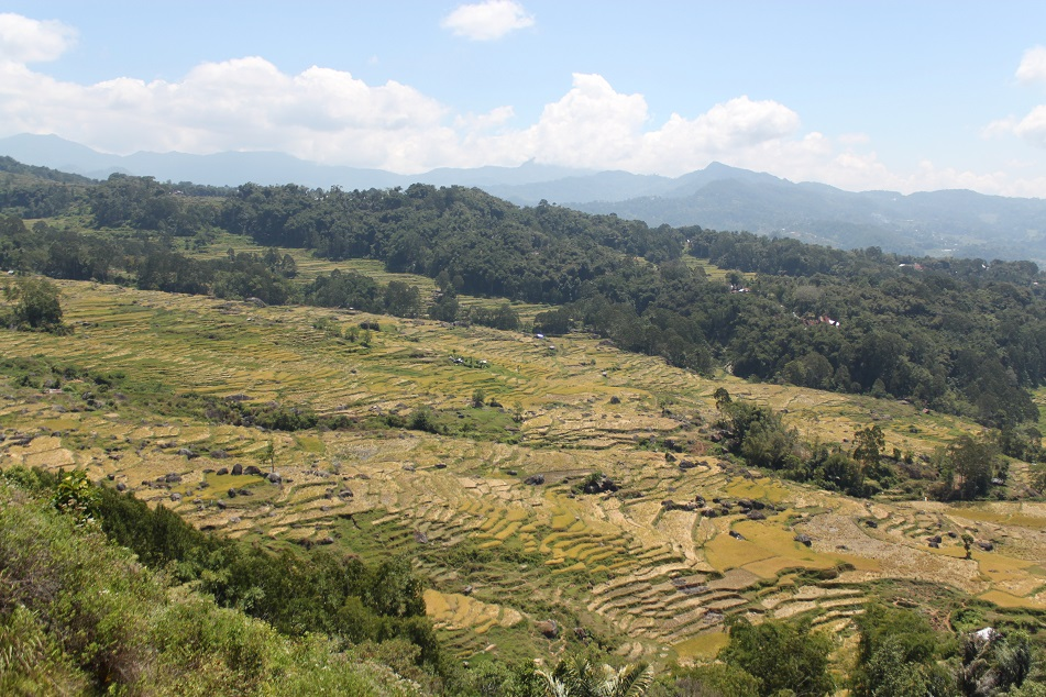 Torajan Highlands Rice Teraaces