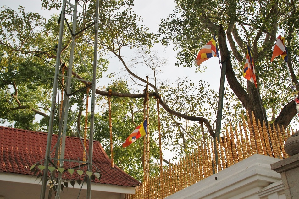 Maha Bodhi Tree, Planted in 249 BC)