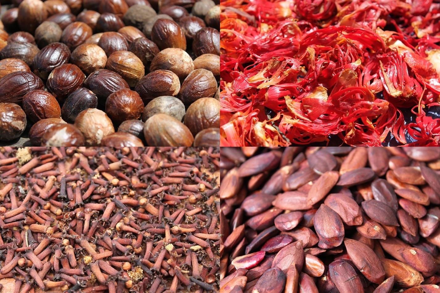 The Spice Odyssey