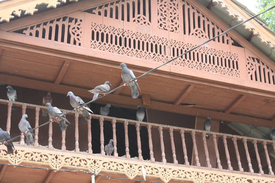 Pigeons and Traditional Architecture