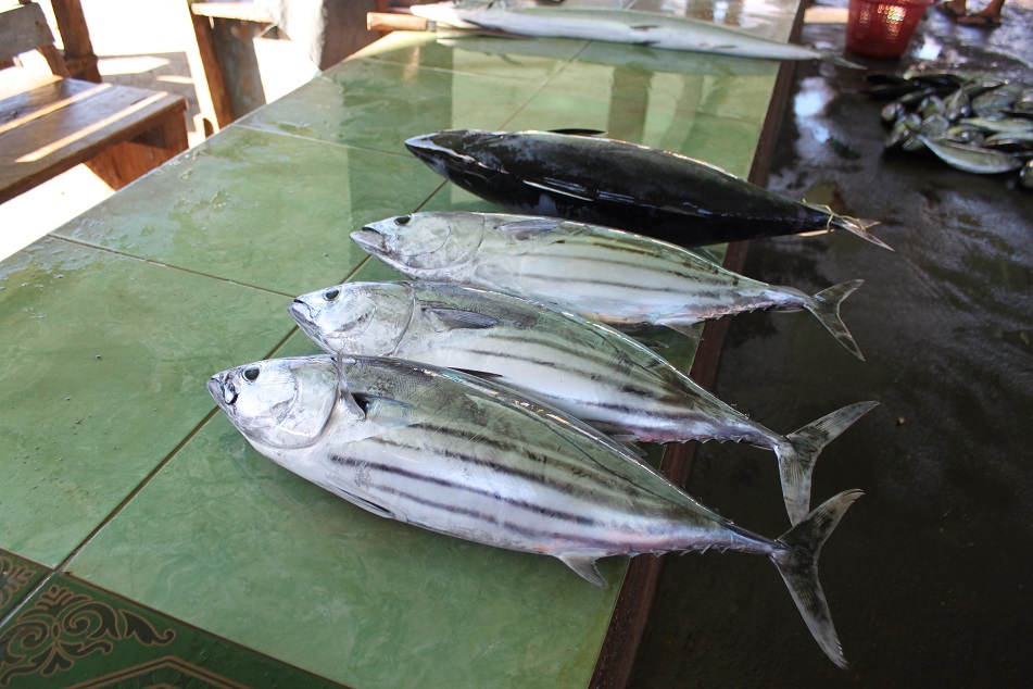 Skipjack Tuna at Banda Neira Market