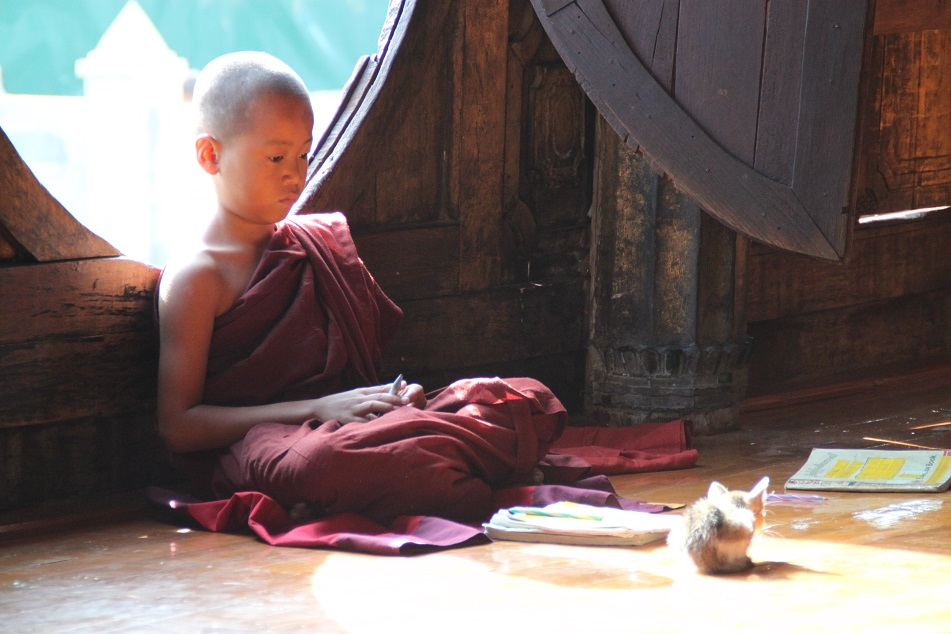 A Novice Monk and A Cat