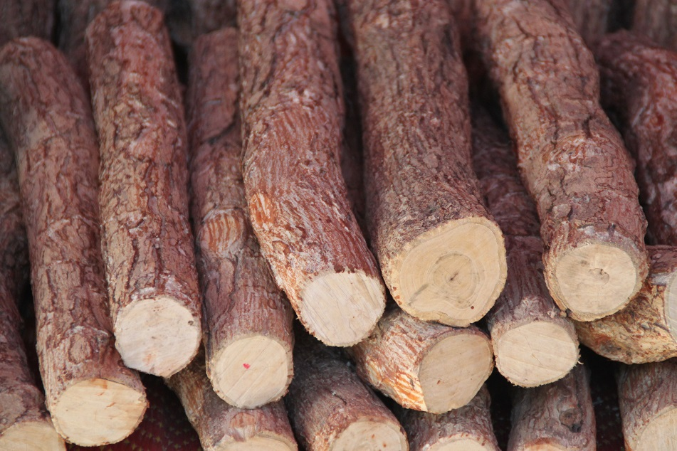 Thanaka Wood for Sale